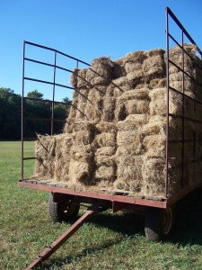 "Via Flickr, WyldWoods  ""Takes me back...  Throwing and stacking the bails of hay on the trailer. Did it for a few years in my early teens."""