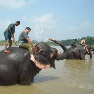 Chitwan National Park on the border of Nepal and India